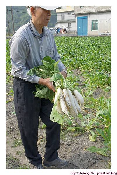 蘿蔔豐收.jpg