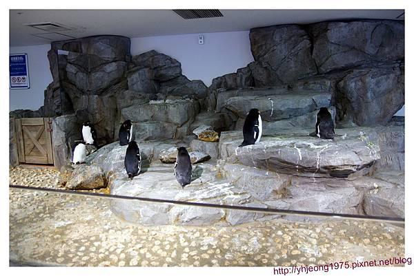 海遊館-不動的企鵝.jpg