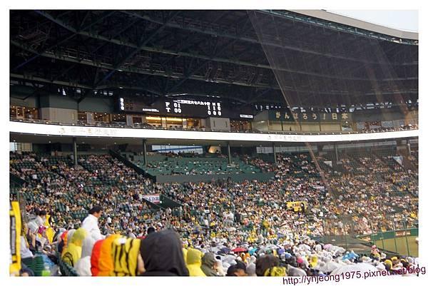 甲子園球場-內野.jpg