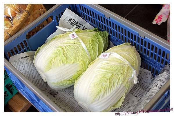 奈良町情報館-大白菜.jpg