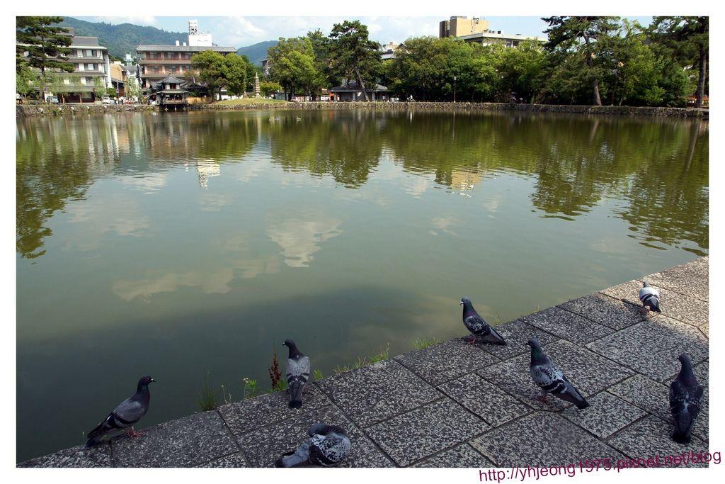奈良町-猿澤池.jpg