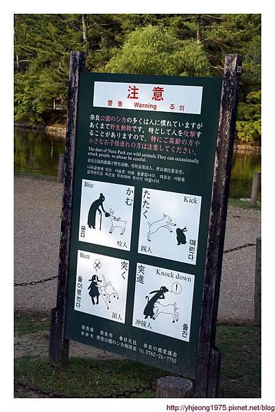 東大寺-有鹿出沒.jpg