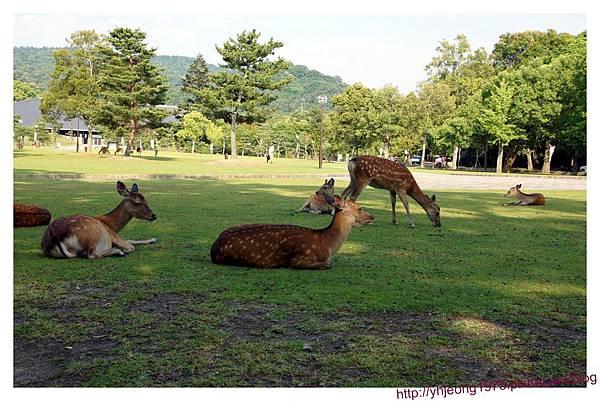 東大寺-懶洋洋的鹿.jpg