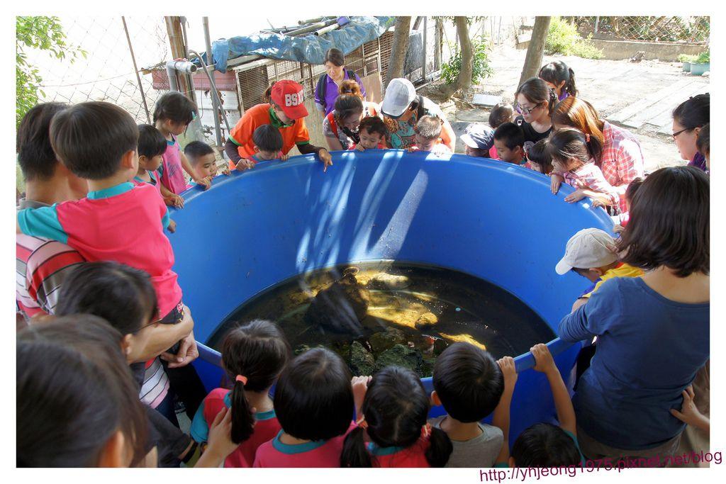 農春鎮-鱷龜.jpg