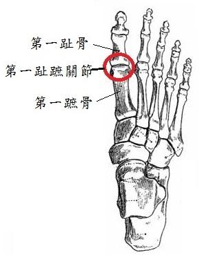 04 httpwww.the-blueprints.com斜blueprints斜human斜sanatomy斜26667view斜foot_bones斜