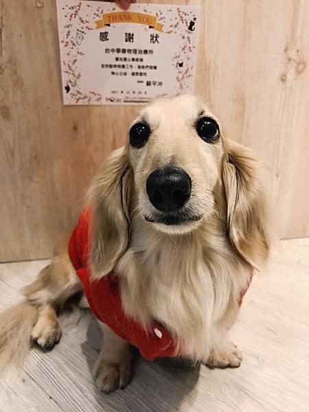 台灣之心愛護動物協會HOTAC
