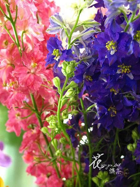千鳥草(春)