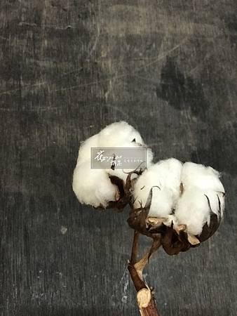 ‖棉花‖ 棉花是聖誕花圈經常使用的材料之一, 雖然現在氣溫還沒有完全降下來, 但生活中已瀰漫了節慶的氛圍, 不想再買塑膠、沒有生命力的花圈了嗎? 花雅集已經為您準備好體驗