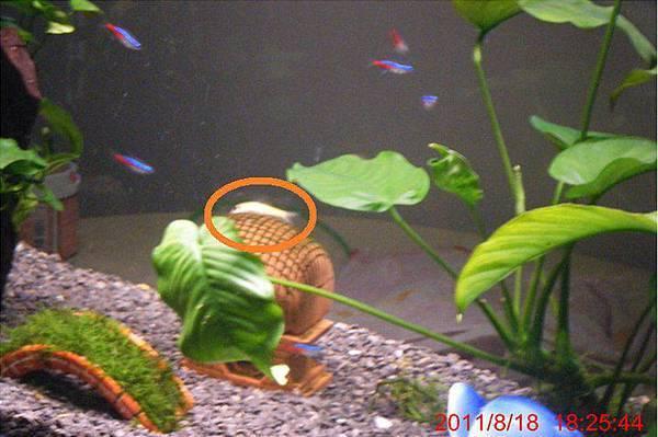 魚缸1.jpg