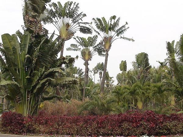 熱帶植物園7