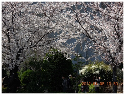 櫻花6DSCN6108