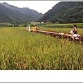 稻田1 IMG_8050