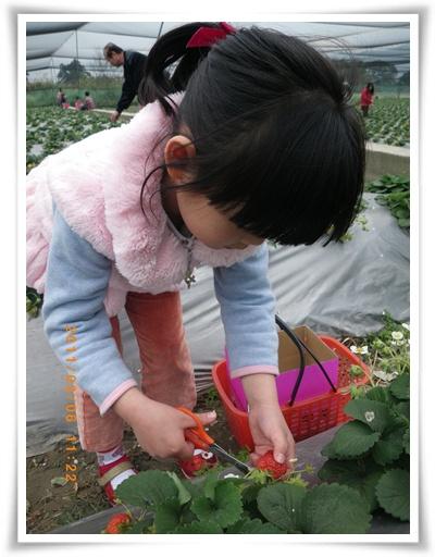 草莓20IMGP2282.JPG