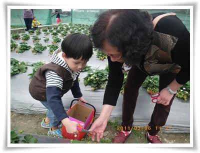 草莓12IMGP2289.JPG