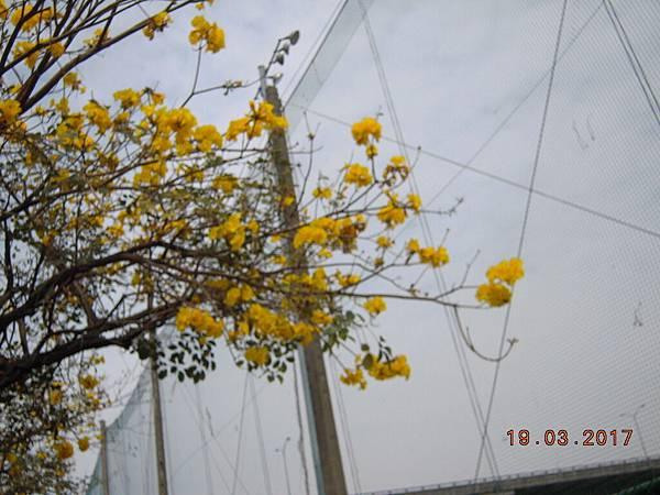黃金風鈴木 (24).JPG