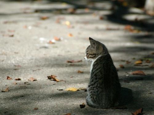 lonelycat