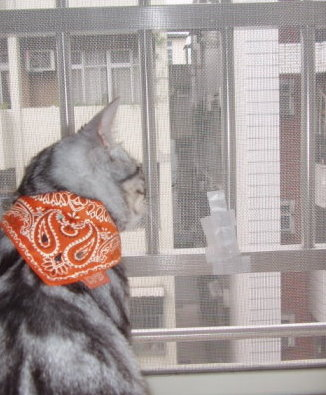 spider cat 5.jpg