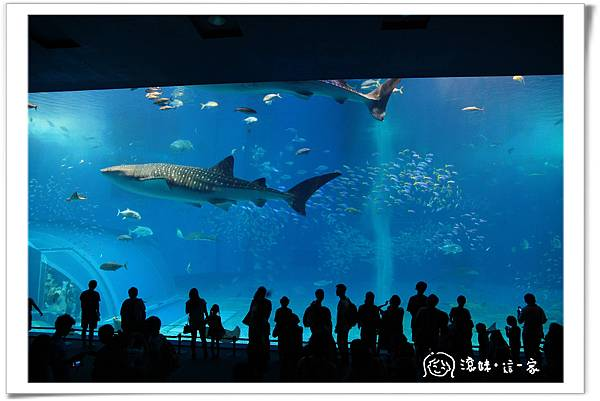 水族館023.jpg