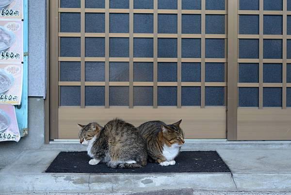 在湯の坪上,很像貓明星的二人,暖呼呼的靠在一起,好可愛啊!