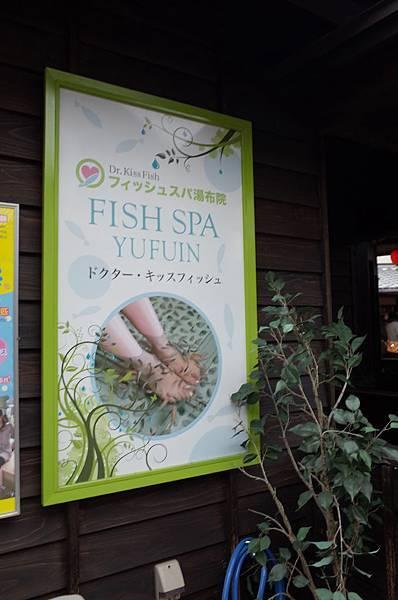 發現FISH SPA!