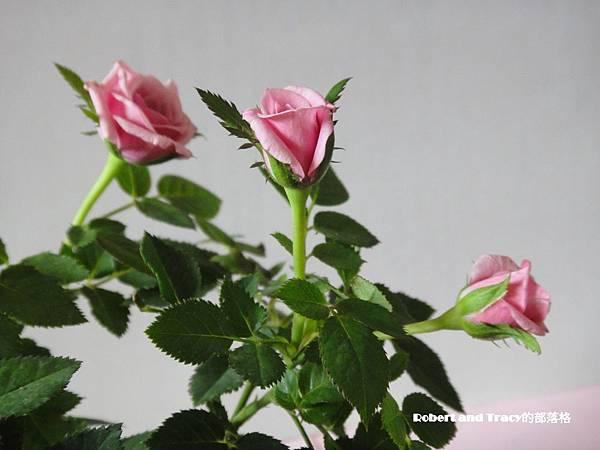 玫瑰04.JPG
