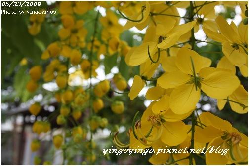 台南後壁_980523_7129.jpg