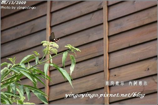 南投鹿谷_內湖國小_980613_7295.jpg