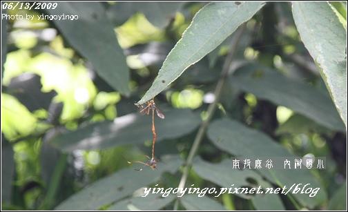 南投鹿谷_內湖國小_980613_7305.jpg