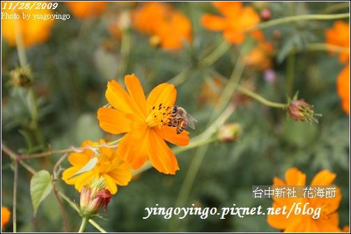台中新社_花海節981128_0106.jpg