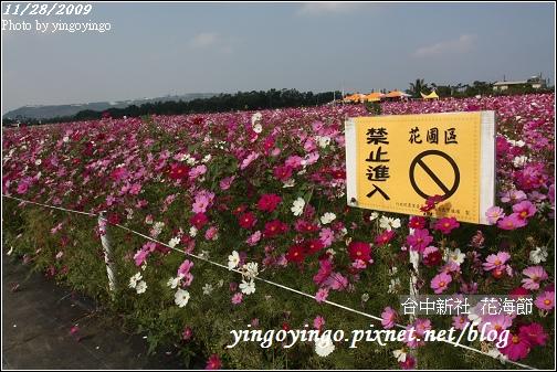 台中新社_花海節981128_0110.jpg