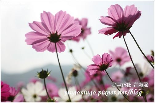 台中新社_花海節981128_0137.jpg
