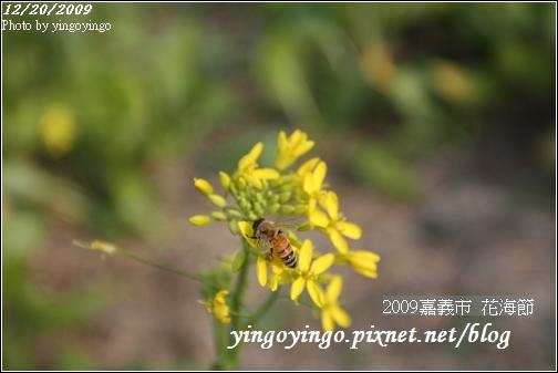 嘉義市_2009花海節_05027.jpg
