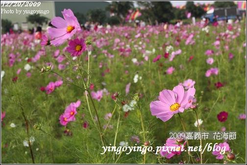 嘉義市_2009花海節_05029.jpg