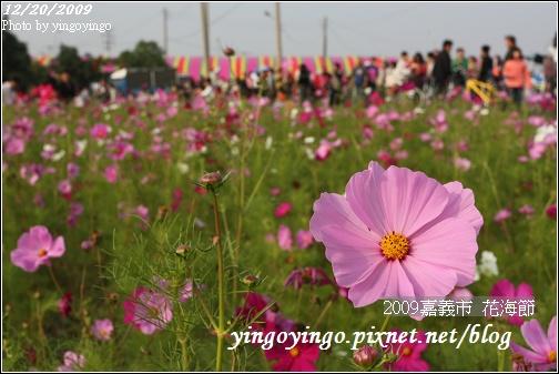 嘉義市_2009花海節_05030.jpg