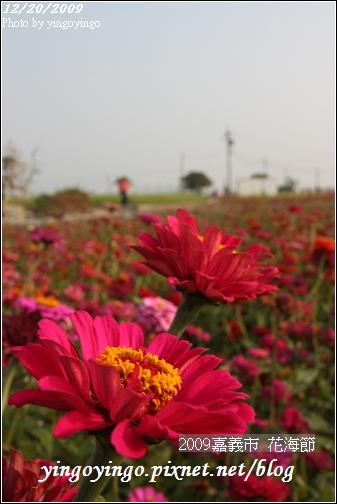 嘉義市_2009花海節_05040.jpg
