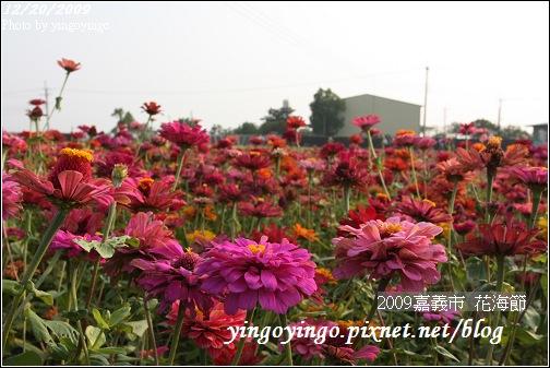 嘉義市_2009花海節_05041.jpg