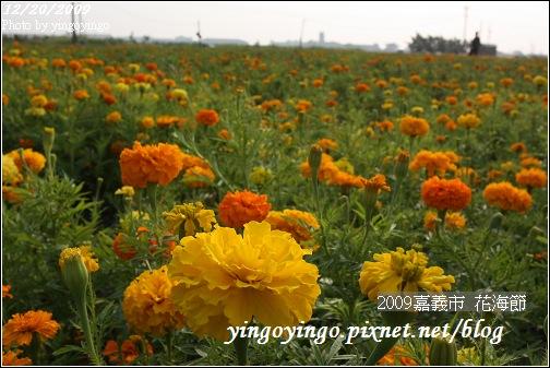 嘉義市_2009花海節_05044.jpg