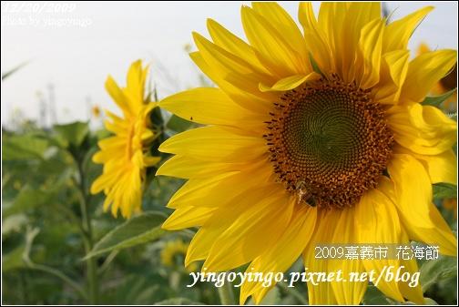 嘉義市_2009花海節_05055.jpg