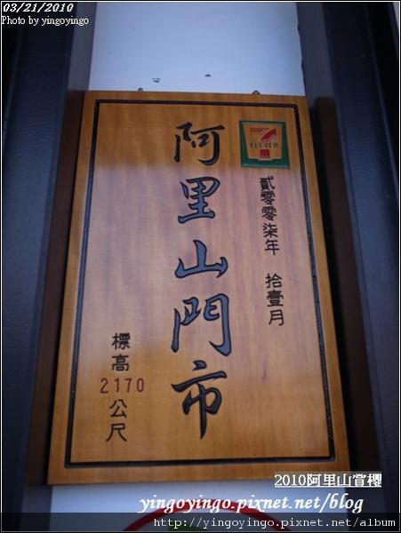 嘉義阿里山_阿里山賞櫻之遊990321_R0010555.jpg