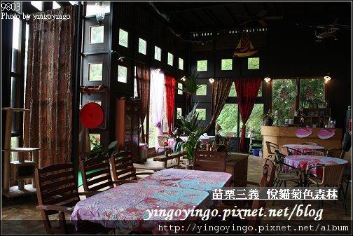 苗栗三義_悅貓菊色森林9903_I5315.jpg