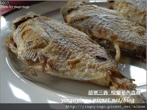 苗栗三義_悅貓菊色森林9903-D01541.jpg