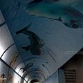 YTS_YTS_20180209_屏東林邊鮮饌道海洋食品文化館/海底隧道/遊戲區035_3A5A9720.jpg
