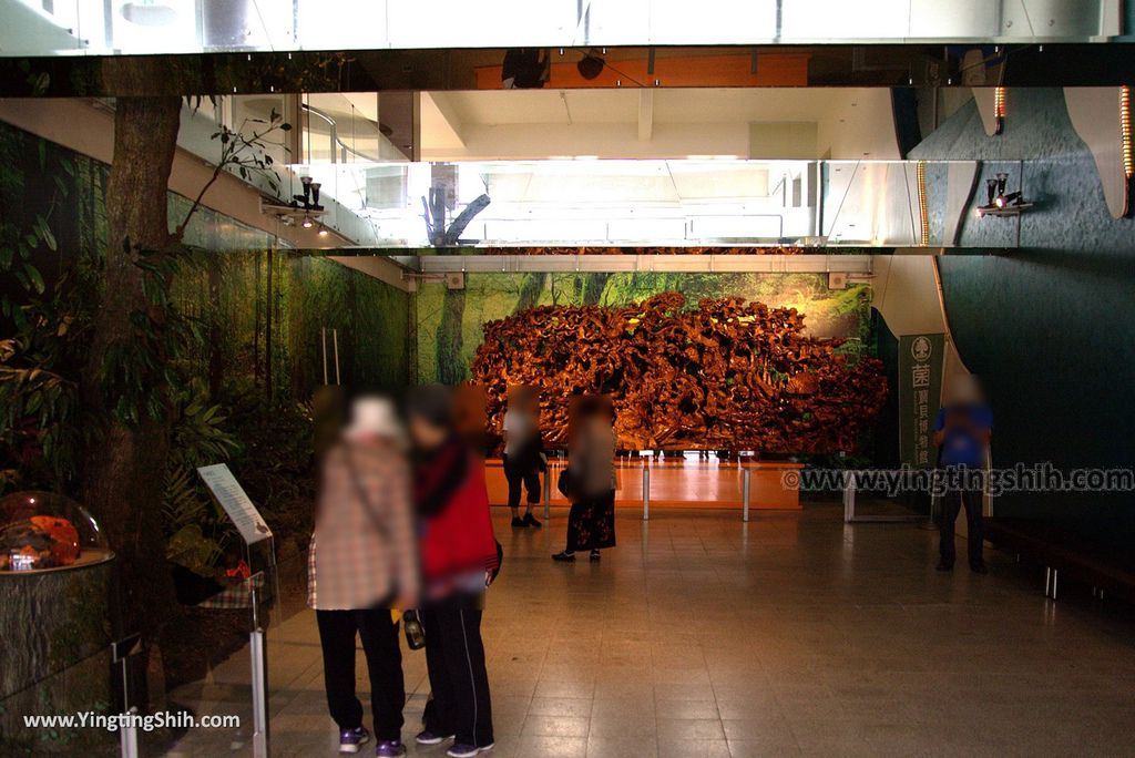 YTS_YTS_20180609_宜蘭市區菌寶貝博物館/牛樟生態區/菌研究室032_3A5A9757.jpg