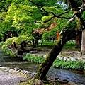 YTS_YTS_20180713_Japan Kyoto Kamigamo-jinja 日本京都上賀茂神社(賀茂別雷神社)/世界文化遺產/舞殿/陰陽石032_3A5A6004.jpg
