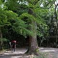 YTS_YTS_20180713_Japan Kyoto Kamigamo-jinja 日本京都上賀茂神社(賀茂別雷神社)/世界文化遺產/舞殿/陰陽石049_3A5A6165.jpg