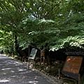 YTS_YTS_20180713_Japan Kyoto Ryoan-ji日本京都龍安寺/世界文化遺產/枯山水石庭018_3A5A9230.jpg