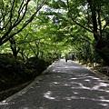 YTS_YTS_20180713_Japan Kyoto Ryoan-ji日本京都龍安寺/世界文化遺產/枯山水石庭022_3A5A9242.jpg