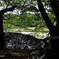 YTS_YTS_20180713_Japan Kyoto Ryoan-ji日本京都龍安寺/世界文化遺產/枯山水石庭023_3A5A9259.jpg