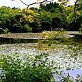 YTS_YTS_20180713_Japan Kyoto Ryoan-ji日本京都龍安寺/世界文化遺產/枯山水石庭025_3A5A9297.jpg