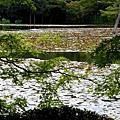 YTS_YTS_20180713_Japan Kyoto Ryoan-ji日本京都龍安寺/世界文化遺產/枯山水石庭026_3A5A9262.jpg